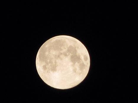 Midnight moon  by Daisy Morales