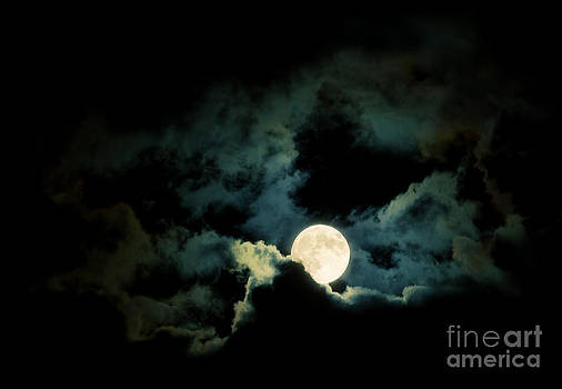 Midnight Moon by Sharon Dominick