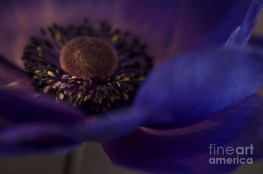 Midnight Purple  by Nicole Markmann Nelson