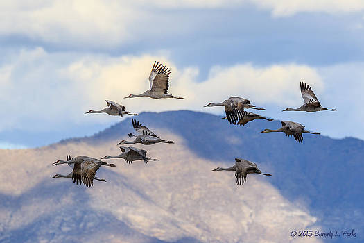 Migration by Beverly Parks