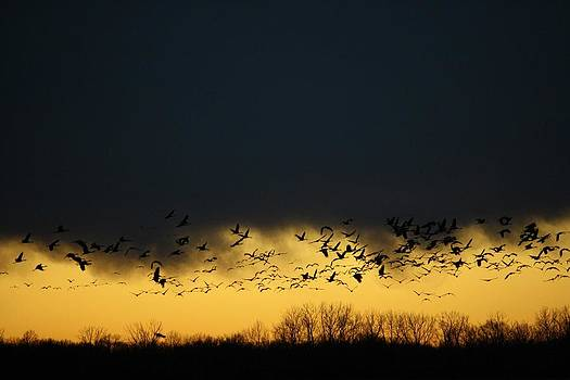 Migration by Genevieve  Borden
