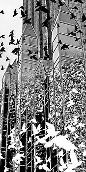 Migration by Glen Klein