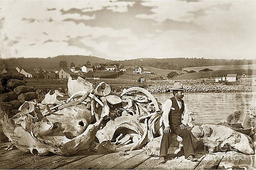 California Views Mr Pat Hathaway Archives - Mike Noon Monterey Whaler on Montereys wharf  circa 1890