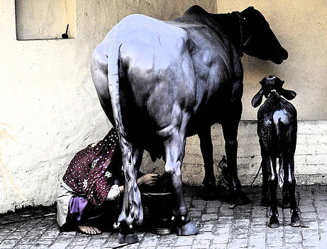 Bliss Of Art - Milking the Cow
