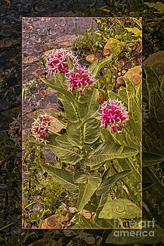Omaste Witkowski - Milkweed Loving a Mountain Stream Abstract Flower Painting