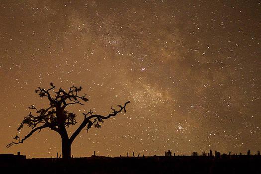 Milky Way Night by Julie Basile