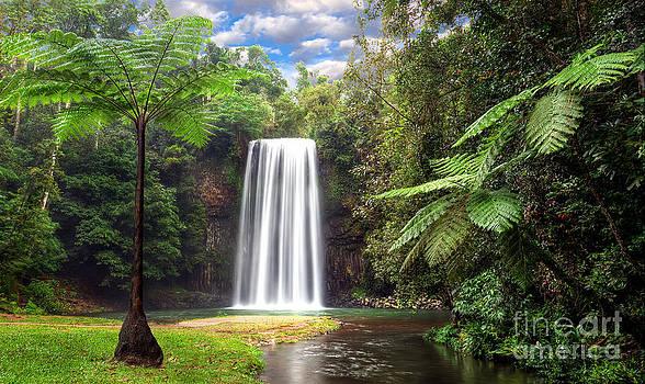 Milla Milla Falls by Shannon Rogers