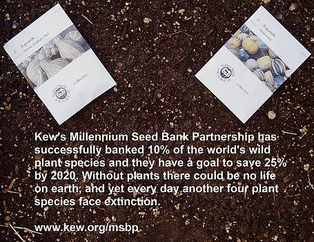Millennium Seed Bank Partnership by Jon Simmons