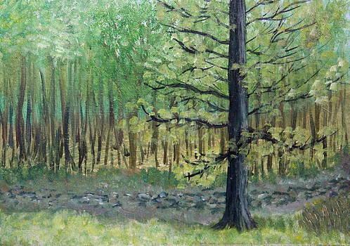 Mills Creek by Joe Sirianni