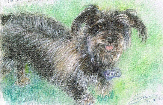 Mindy the Doxie Terrier by Shan Ungar