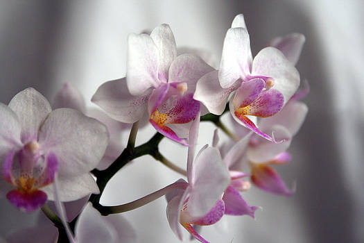 Mini Orchids 1 by Marna Edwards Flavell
