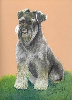 Miniature Schnauzer by Ruth Seal