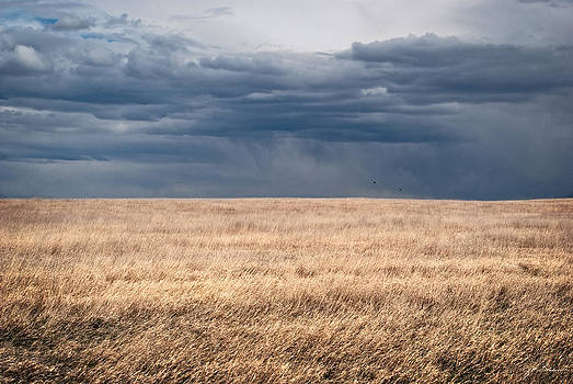 Julie Magers Soulen - Minimalist Prairie Grassland with Stormy Sky
