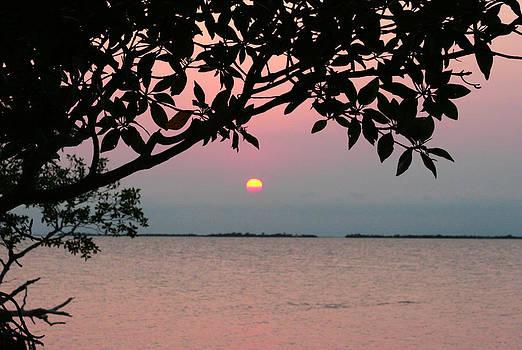 Minnesota Sunset by Laurie Poetschke