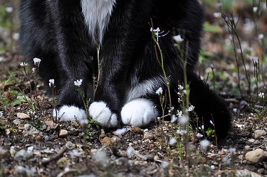 Ronda Broatch - Minnie Feets