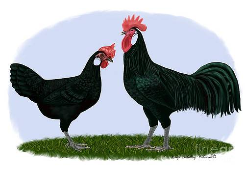 Minorca Rooster and Hen by Leigh Schilling