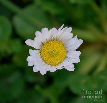 Miss Daisy by Marija Djedovic