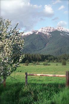 Mission Range Apple blossoms by Jim Cotton