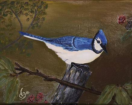 Missouri Blue Jay by DG Ewing