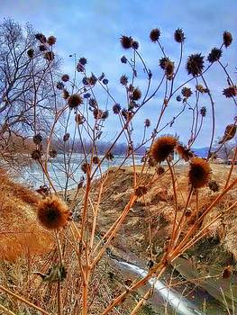 Missouri river weeds. by Dustin Soph