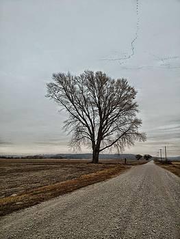 Missouri tree by Dustin Soph