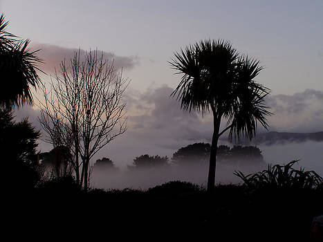 Mist and Palmtree by Phil Darby