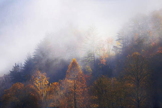 Mist In Mountains by Dorothy Walker