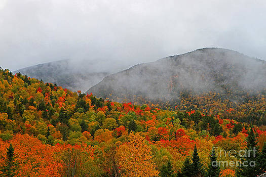Mist of Color by Lloyd Alexander-Pictures for a Cause