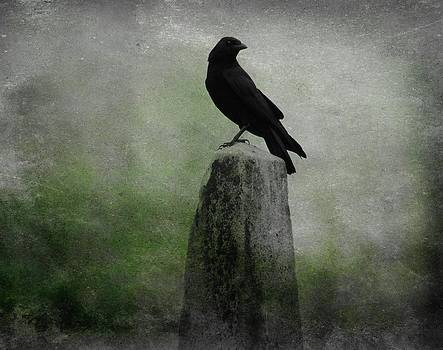 Gothicrow Images - Raven In A Mist Of Green