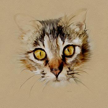 Bamalam  Photography - Mister Sprinkles - Tabby Cat