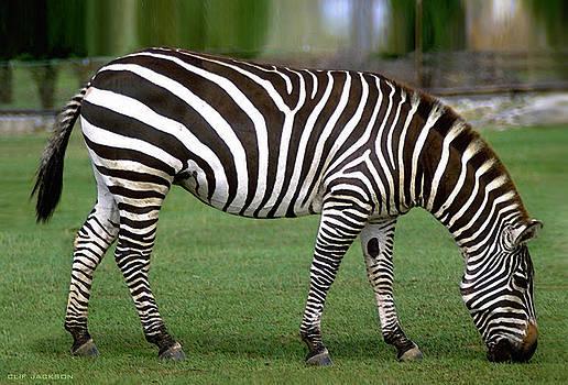 Mister Stripes by Clif Jackson