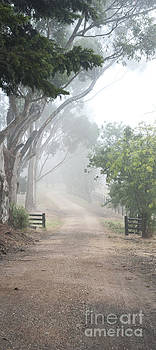 Misty Country Driveway by Gillian Vann