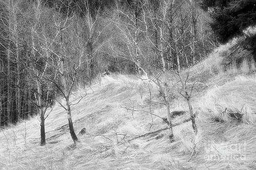 Roland Stanke - Misty Forest