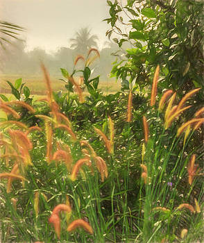 Misty Grass by James King