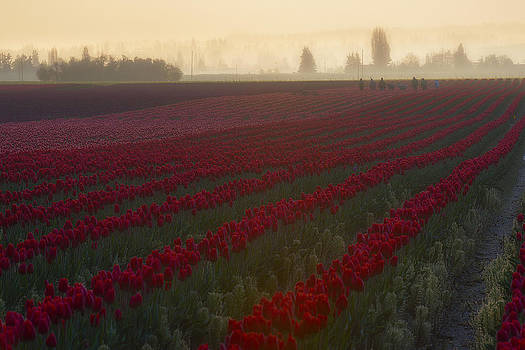 Misty Harvest by Ryan Manuel
