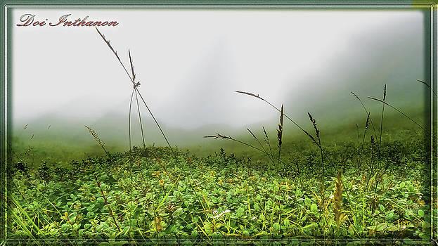 Roy Foos - Misty Heights