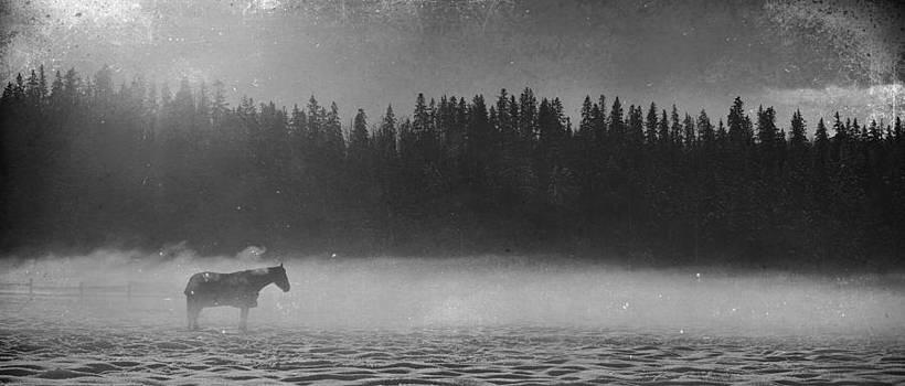 Misty by Larysa  Luciw