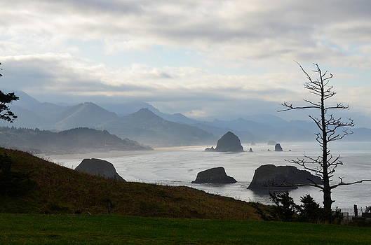 Misty Morn by Linda Larson