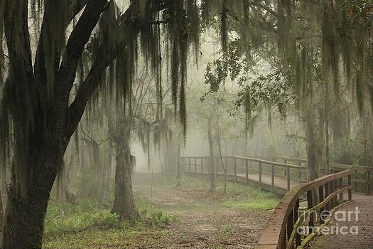Misty Morn by Vicki Genna