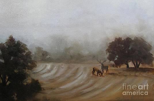 Misty Morning At The Ranch by Barbara Haviland