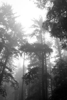 Misty Morning by Christian Otjen