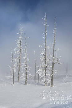 Sandra Bronstein - Misty Morning In Yellowstone National Park