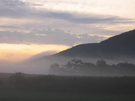 Misty Morning by Megan Hughes