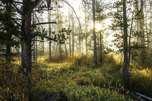 Misty Morning by Rick Otto