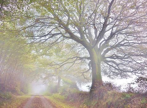 Misty Morning by Rosie Schneider