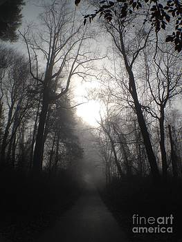 Misty Trail by Stephanie  Varner
