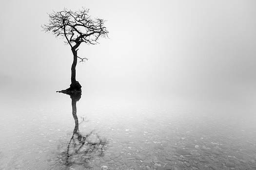 Misty Tree by Grant Glendinning