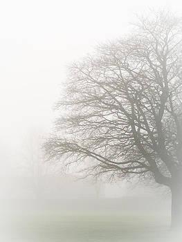 Hakon Soreide - Misty Tree