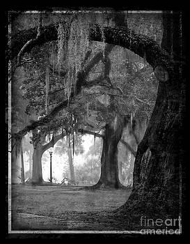 Misty Walk Through The Oak Trees by Jeanne  Woods