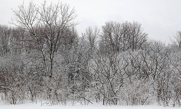 Mixed forest in winter. by Rob Huntley